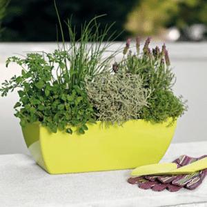 herbes jardiniere