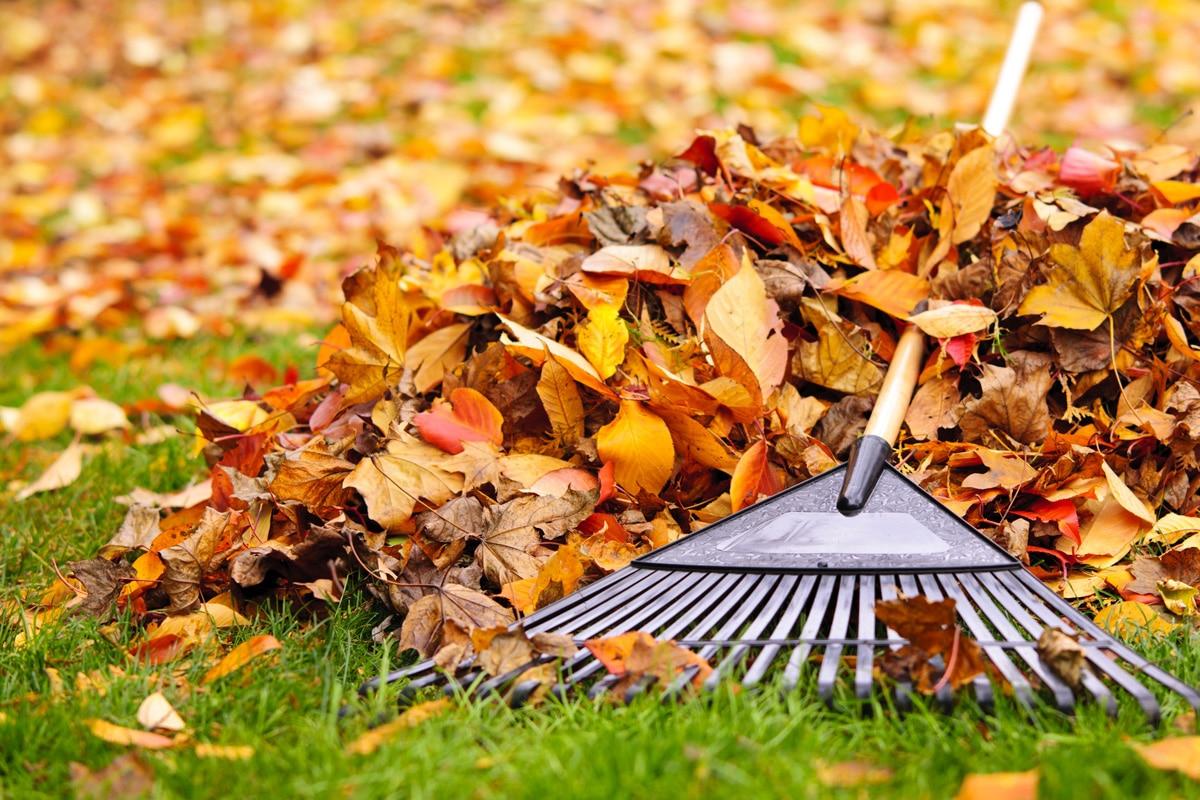 Winterklaar Maken Tuin : De tuin winterklaar maken in november