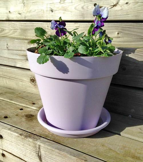 Au jardin printemps rime avec entretien semis et plantations for Entretien jardin printemps
