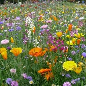 prairie-fleurie-nouvelle-tendance-fleurs