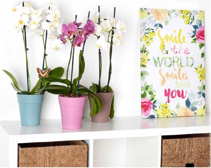 artevasi orchid pots