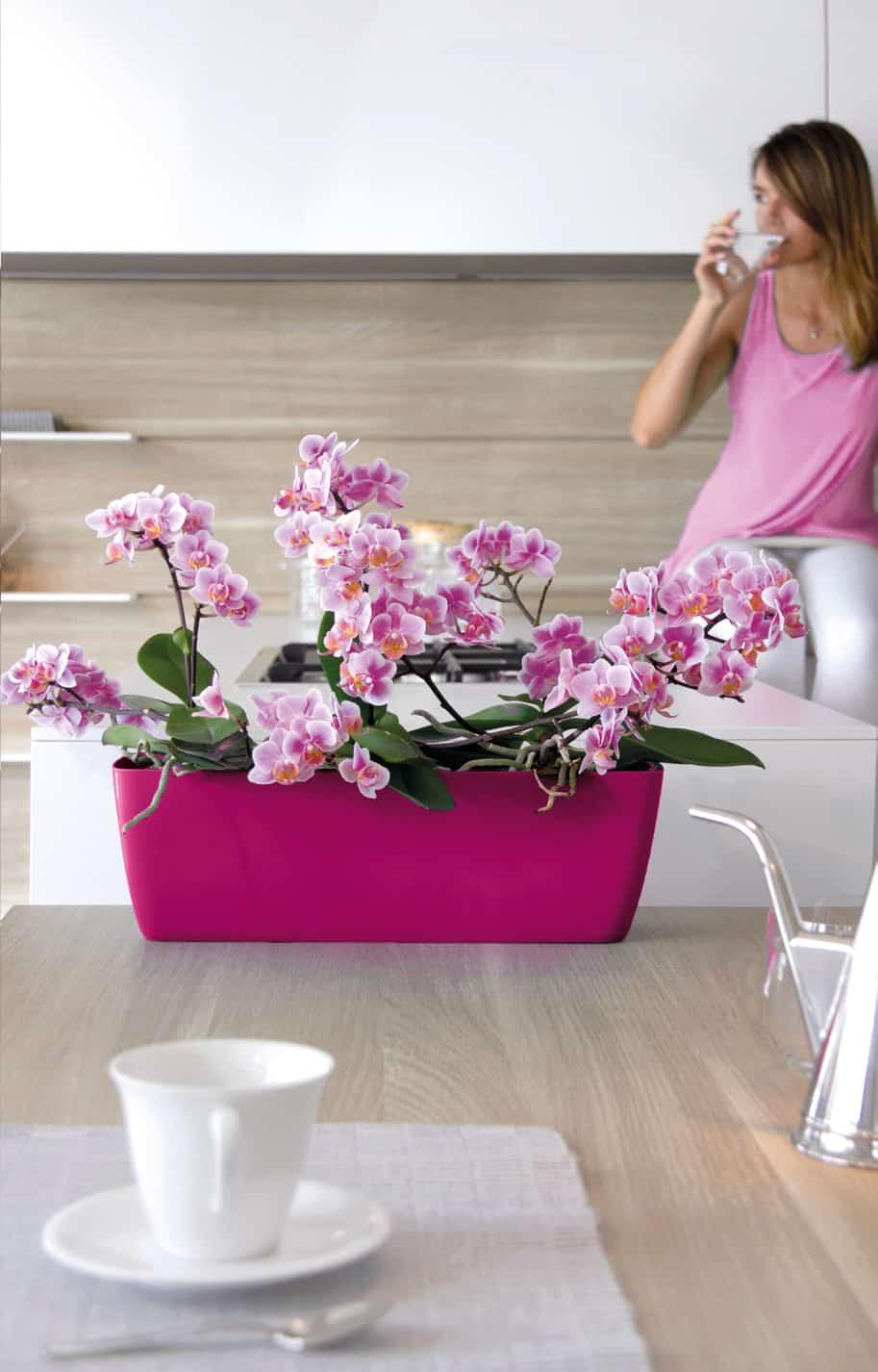 Pot Plastique Grande Taille orchidée phalaenopsis : bien choisir son cache-pot