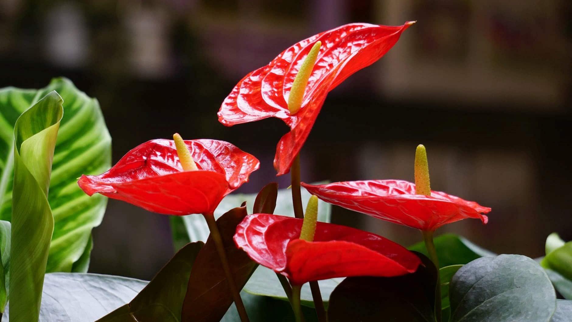 Plante Robuste Pour Terrasse des plantes dépolluantes pour purifier votre intérieur