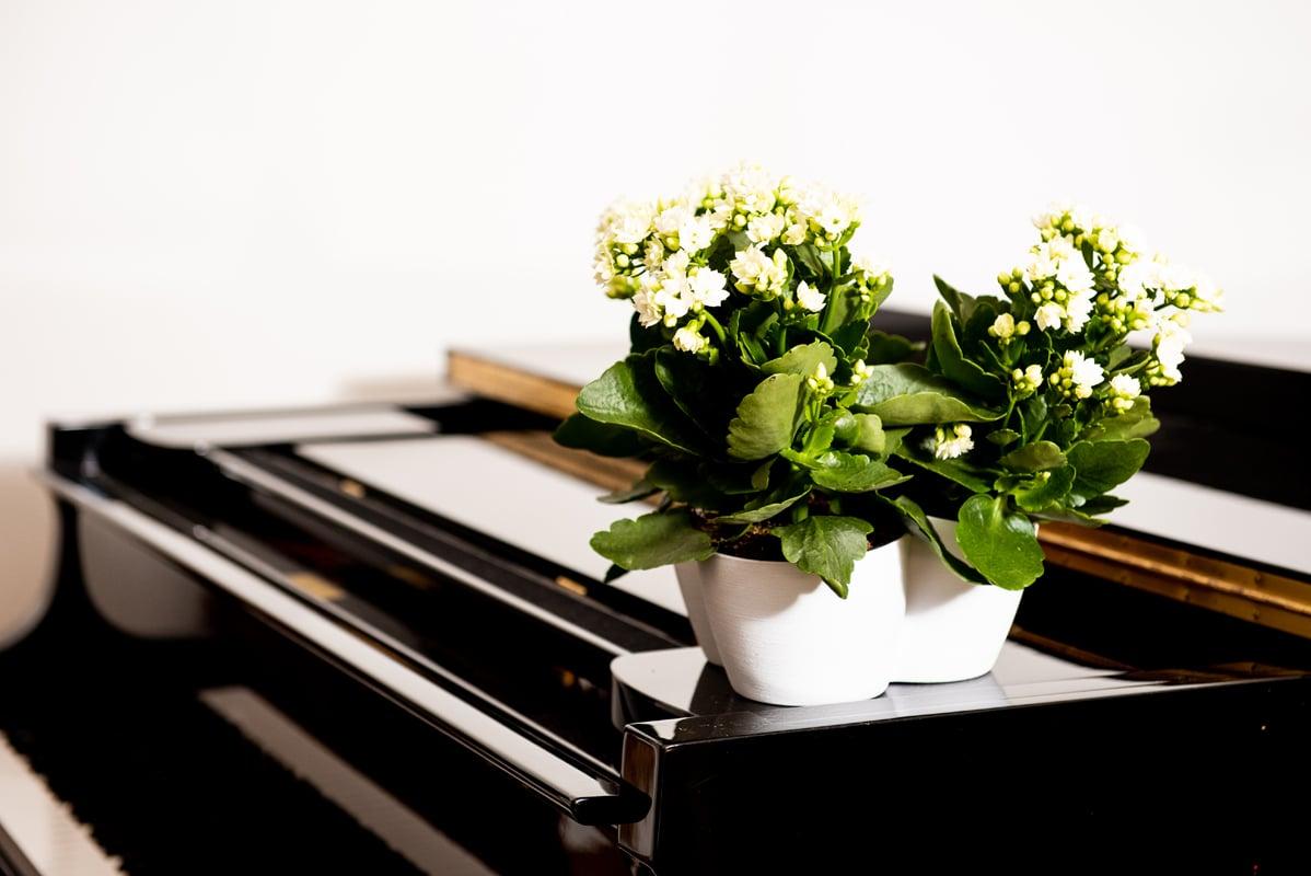 Care of indoor plants in winter